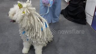 Pampered pooches at Bangkok pet show
