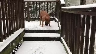 Dog has massive snowstorm freakout - Video