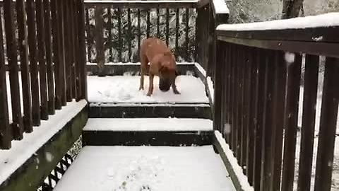 Dog has massive snowstorm freakout