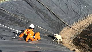 Workers Rescue Dog And Her Puppy From Water Pit - Video