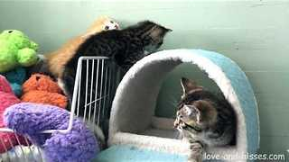 These Three Kittens Know How to Put Up a Good Fight - Video
