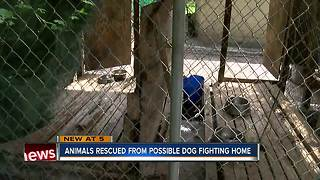 Animals rescued from possible dog fighting home