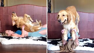 Donward Dog! Hilarious Woman And Golden Retriever Practise Yoga Together