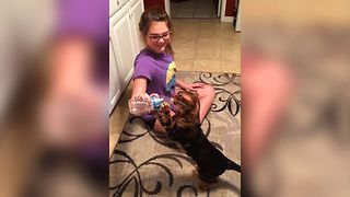 Water Bottle Is Cat's Best Friend - Video