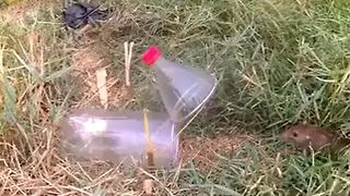 How To Build a simple Mousetrap - Video