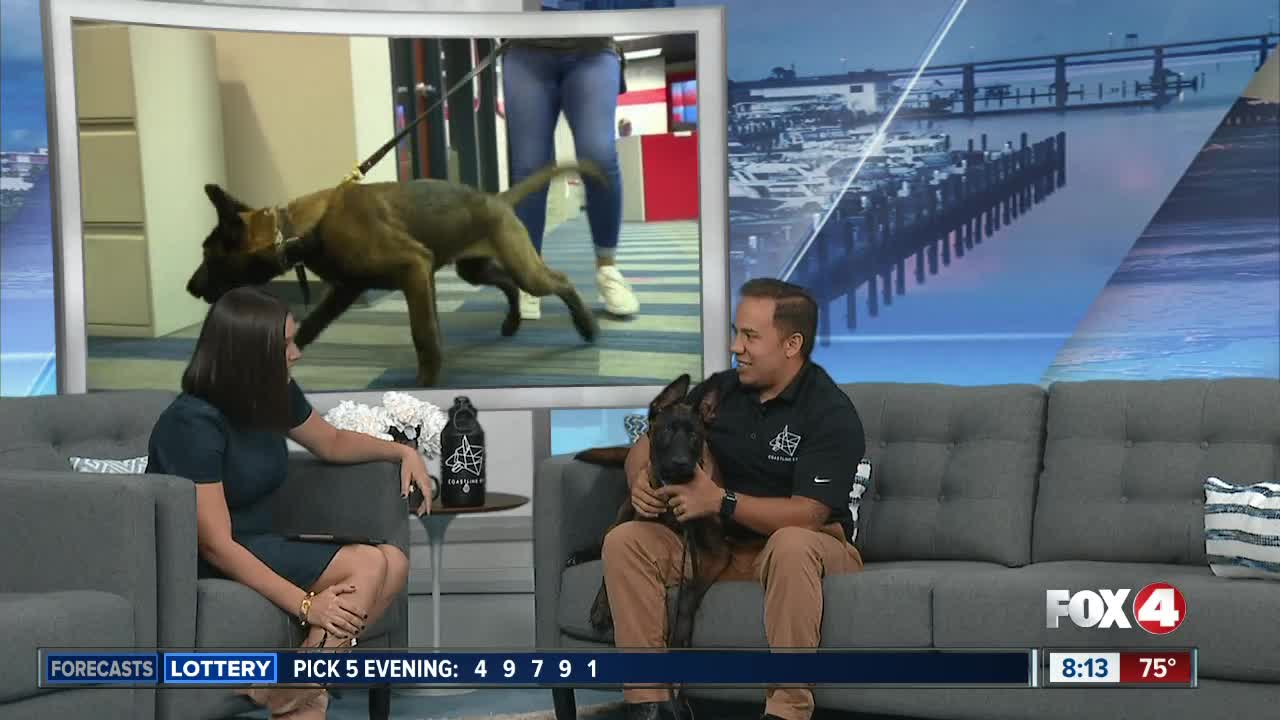 How are military dogs trained?