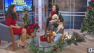 Tips for holiday pet safety - Video