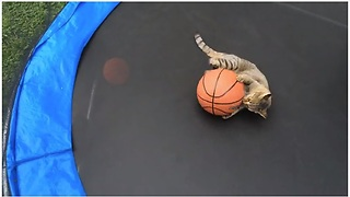 Talented Cat Plays Basketball On A Trampoline  - Video
