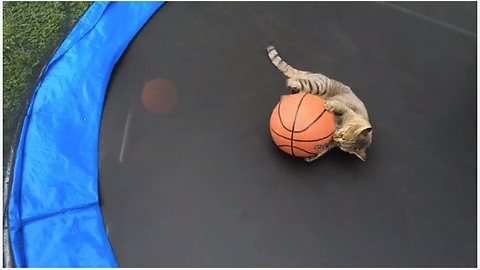 Talented Cat Plays Basketball On A Trampoline