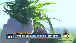 Farm Bill legalizes hemp growing in the United States