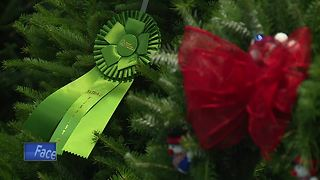 Tree contests to determine White House Christmas Tree - Video