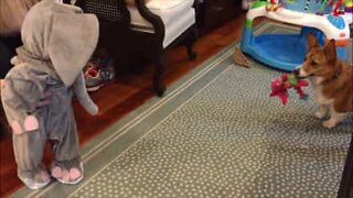 Baby in elephant costume scares off dog