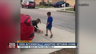 Lakeland dog that wandered off and was accidentally adopted is now back home - Video