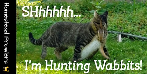 Homestead Cat ~ Otis ~ Is Great at Hunting Rabbit