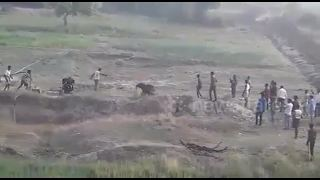 Angry elephant calf charges rescue team - Video