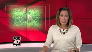 Montcalm County deer may have had chronic wasting disease - Video