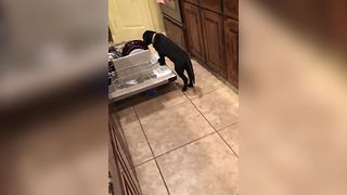 Puppy Crawls Into Dishwasher For Food - Video