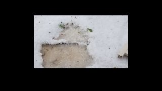 Woman Celebrates Florida Hailstorm With Song