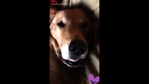 You won't believe what this dog does while sleeping!