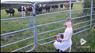 Talented Cowgirl Plays Polka For Her Cows - Video