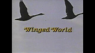 Winged World