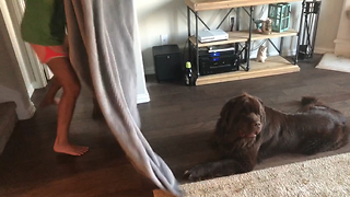 Newfoundland bewildered by disappearing magic trick