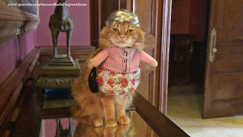 Cat looks absolutely fabulous in her granny Halloween costume
