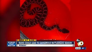 Rains could lead to dangerous rattlesnake season