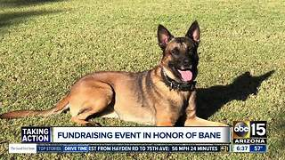 Phoenix Police Foundation holding fundraiser for K-9 Unit in honor of Bane - Video