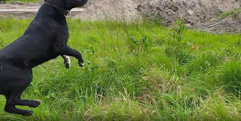 Crazy Dog Hilariously Jumps Like A Antilope - Try Not To Laugh