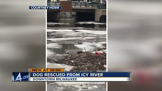 Dog rescued from Milwaukee River after falling through ice