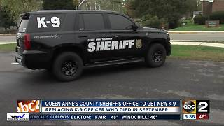 Queen Anne's County Sheriff's Office getting a new dog for the K-9 unit - Video