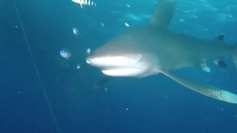 Shark Keeps Telling Diver He Is Not Welcome In This Part Of The Sea
