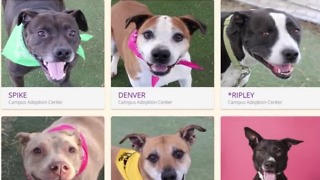 Animal Foundation training aims to make pit bulls more adoptable
