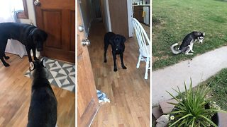 Clever dog helps house train puppy - Video