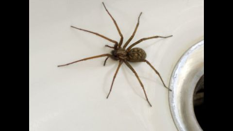 Top 10 Misconceptions About Spiders