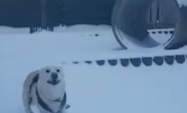 Shelter Dogs Have Snow Much Fun Frolicking in White Stuff