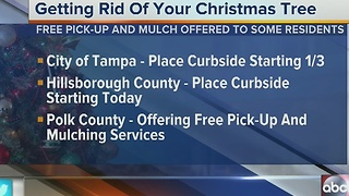 Tampa locations that help you get rid of your Christmas tree - Video