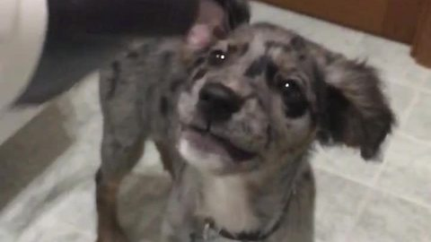 Slow motion captures puppy's obsession with hairdryer
