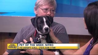 Pet of the week: 4-month-old Nitro is loving puppy searching for his forever family - Video