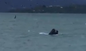 Possible Whale Sighting at Wellington Harbour Delights Motorists - Video