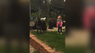 Little Girl Joins The Dog Pack