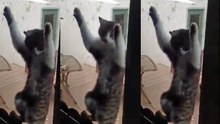 Hilarious moment cat found clinging on to mosquito screen when door opened - Video