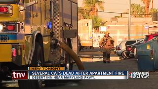 Several cats killed by apartment fire - Video