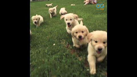 Puppies! - Your Daily Diversion Is A Calming Romp with 21 Cuties