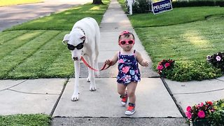 Deaf great dane and toddler need just cuddles and sign language for adorable friendship - Video