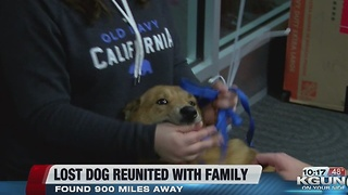 Lost dog reunited with family in Tucson - Video