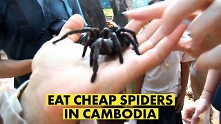 Creepiest dollar menu: Cambodia's crawling delicacies - Video