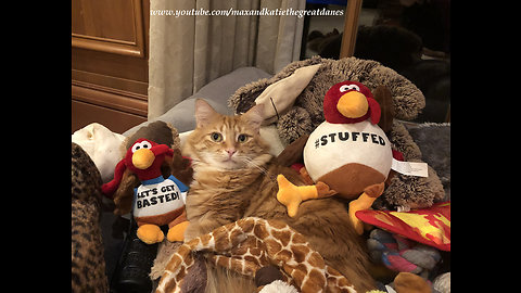 Cat chills out among various Thanksgiving turkey toys