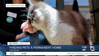 Pet of the Week: Kitty